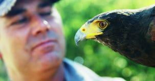 Hombre con el águila del halcón en un día soleado metrajes