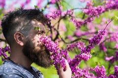 Hombre con la barba y bigote en cara tranquila cerca de las flores el día soleado Perfumería y concepto de la fragancia Hombre ba foto de archivo libre de regalías