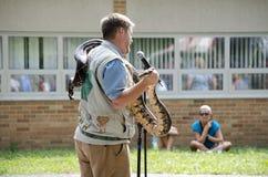 Hombre con la serpiente que habla sobre fauna Fotografía de archivo
