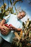Hombre con las manzanas Imagen de archivo libre de regalías
