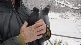 Hombre con las palomas en parque del invierno almacen de video