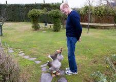 Hombre con los gansos Foto de archivo libre de regalías