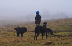 Hombre con los perros en prado brumoso Foto de archivo libre de regalías