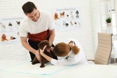 Hombre con su veterinario que visita del animal dom?stico Doc. que examina el perrito de Labrador imagenes de archivo