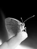 Hombre contra la naturaleza: Amabilidad Foto de archivo libre de regalías