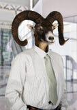 Hombre de negocios con la cabeza de una cabra Imagen de archivo libre de regalías