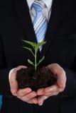 Hombre de negocios Holding Sapling Foto de archivo libre de regalías