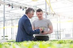 Hombre de negocios que discute sobre almácigo de la hierba con el botánico en invernadero foto de archivo