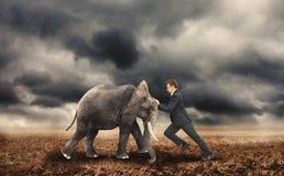 Hombre de negocios que empuja con un elefante Imagen de archivo libre de regalías