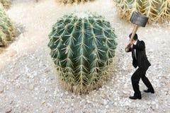Hombre de negocios que sostiene el martillo con el cactus Foto de archivo libre de regalías