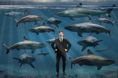 Hombre de negocios rodeado por los tiburones Imagenes de archivo