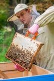Hombre del Apiarist que trabaja en naturaleza en verano Fotografía de archivo