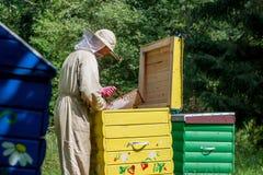 Hombre del Apiarist que trabaja en naturaleza en verano Fotos de archivo libres de regalías