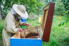 Hombre del Apiarist que trabaja en naturaleza en verano Fotos de archivo