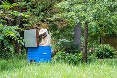Hombre del Apiarist que trabaja en naturaleza en verano Foto de archivo