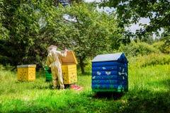 Hombre del Apiarist que trabaja en naturaleza en verano Imagenes de archivo