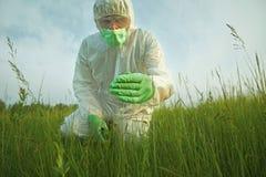 Hombre del científico que examina las plantas verdes en campo del verano fotografía de archivo libre de regalías