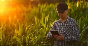 Hombre del granjero con la tableta en campo Tableta de la tenencia de la mujer bastante joven en campo en la puesta del sol metrajes