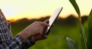 Hombre del granjero con la tableta en campo Tableta de la tenencia de la mujer bastante joven en campo en la puesta del sol almacen de video