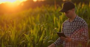 Hombre del granjero con la tableta en campo Tableta de la tenencia de la mujer bastante joven en campo en la puesta del sol almacen de metraje de vídeo