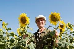 Hombre del granjero con los girasoles Fotografía de archivo libre de regalías