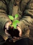 Hombre del jardinero que sostiene el árbol joven verde con el suelo Fotografía de archivo