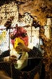 Hombre del pájaro Imagen de archivo