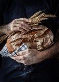 Hombre del panadero que sostiene la barra de pan y el trigo rústicos en manos Fotografía de archivo
