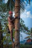 Hombre del toddy que se prepara para subir un árbol de coco fotos de archivo