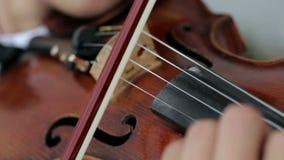 Hombre del violinista del Latino en un fondo blanco almacen de video