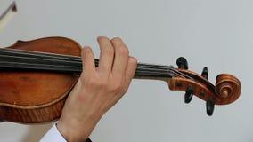 Hombre del violinista del Latino en un fondo blanco almacen de metraje de vídeo