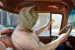 Hombre descamisado que lleva la máscara extraña del gato mientras que conduce fotos de archivo