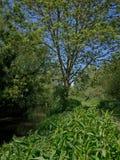 Hombre empequeñecido por naturaleza en hábitat del río Imagen de archivo