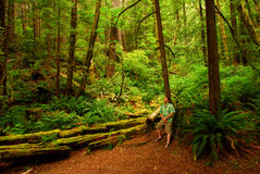 Hombre en bosque de la secoya Fotografía de archivo
