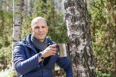 Hombre en bosque que recoge la savia del abedul a la taza de acero Fotos de archivo