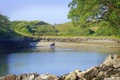 Hombre en caballo en la playa en Killybegs, Irlanda del oeste Imagen de archivo libre de regalías