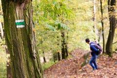 Hombre en caminar la trayectoria en un bosque, una muestra del rastro o un marcador en un árbol foto de archivo