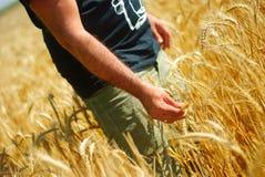 Hombre en campo de maíz Imagen de archivo