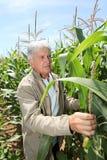 Hombre en campo de maíz Foto de archivo