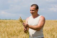 Hombre en campo de trigo Fotografía de archivo libre de regalías