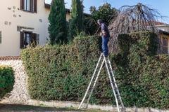 Hombre en el trabajo sobre una escalera con el condensador de ajuste de seto en la acción imagenes de archivo