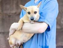 Hombre en el uniforme del veterinario que abraza un pequeño perro foto de archivo libre de regalías