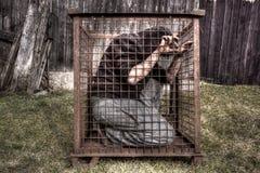 Hombre en jaula Fotografía de archivo libre de regalías
