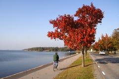 Hombre en la bici Imagen de archivo libre de regalías