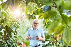 Hombre en naranjal foto de archivo libre de regalías