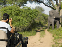Hombre en Safari Taking Photograph Of Elephant Imagenes de archivo