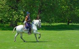 Hombre en traje isabelino en un caballo blanco que galopa delante de árboles Foto de archivo