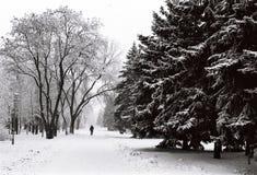 Hombre en un parque del invierno Imágenes de archivo libres de regalías