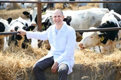 Hombre en una capa blanca en la granja de la vaca Foto de archivo