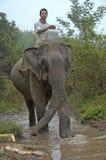 Hombre encima de un elefante en el río Mekong para lavar el mamífero Imagen de archivo libre de regalías